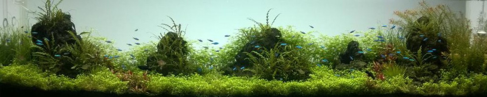 Living With Aquariums