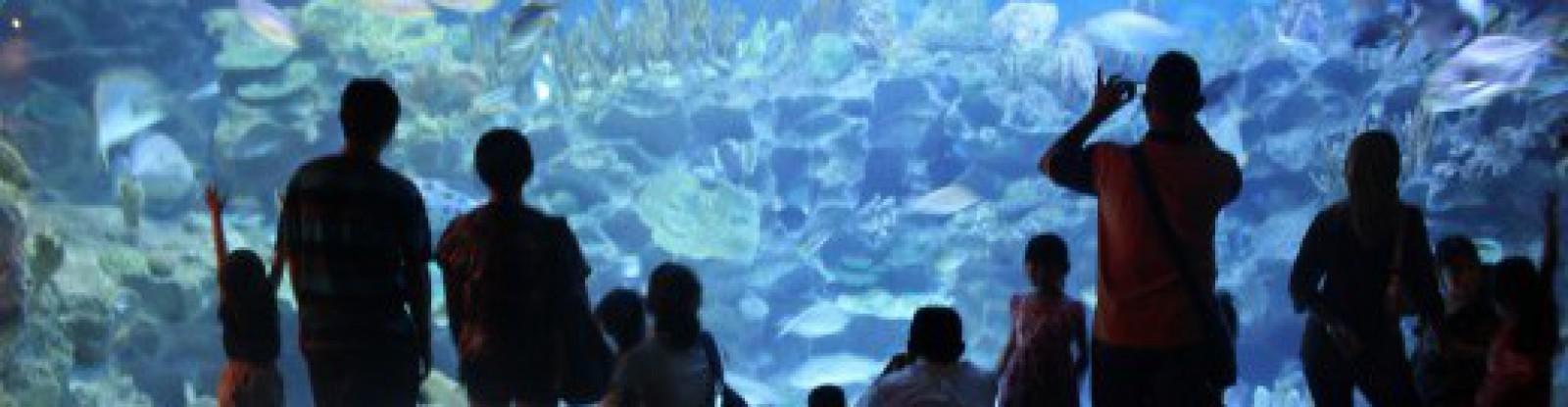 Living With Aquariums