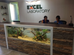An Aquarium as a Reception Desk